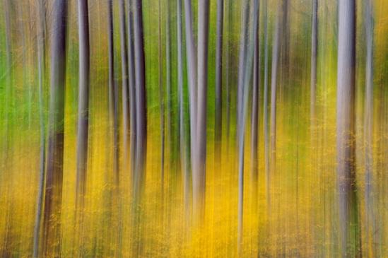 fall-streaked-trees
