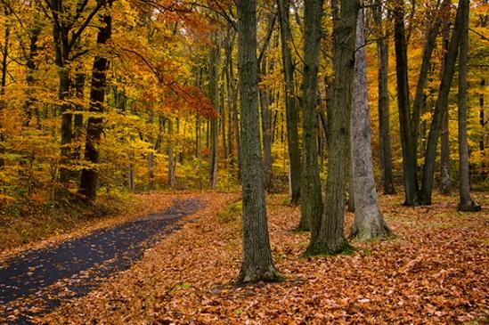 fall-woodland-scene