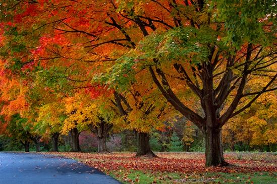 middle-creek-autumn3