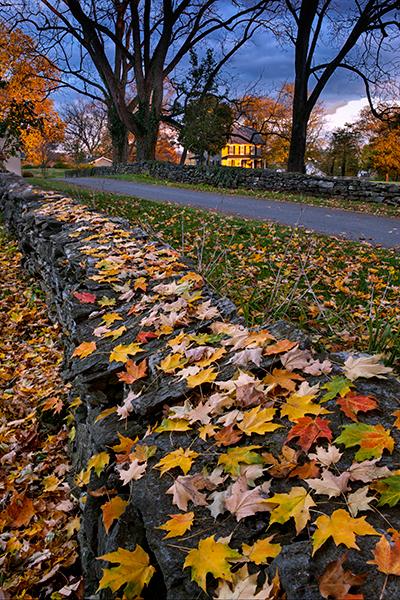 quarry-road-foliage