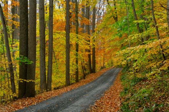 seglock-fall-scene2