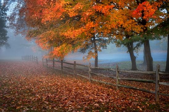 cloister-foggy-autumn9