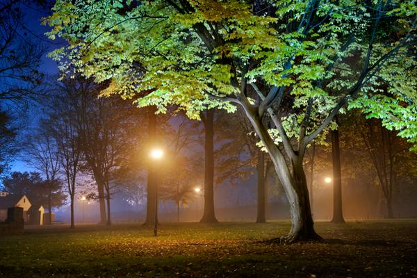 park-fog