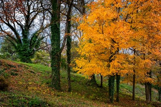 quarry-road-foliage5