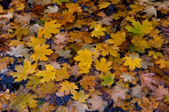 rail-trail-leaves