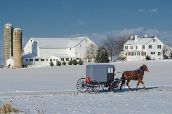 amish-buggy-cold-weather