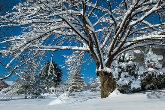 brownstown-snowy-tree