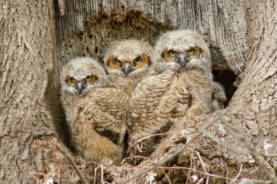 three-owls
