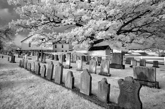penryn-cemetery-trees3