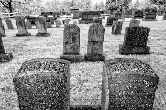 penryn-cemetery-trees4