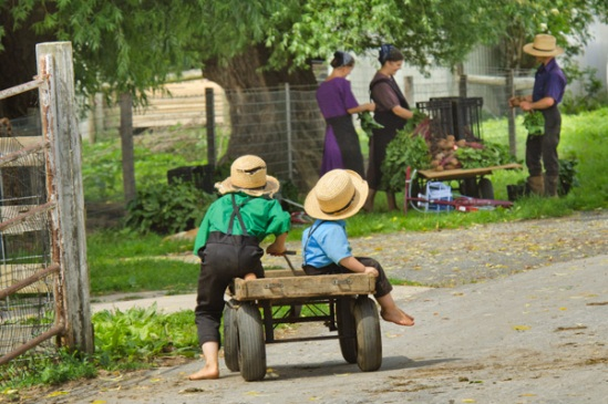 amish-wagon-riders