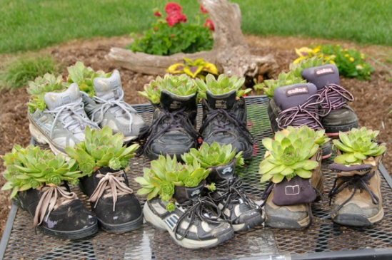 hens-and-chicks-shoes