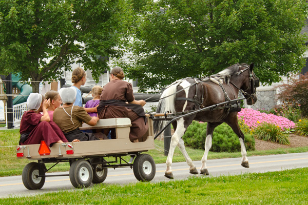 amish-wagon-friends