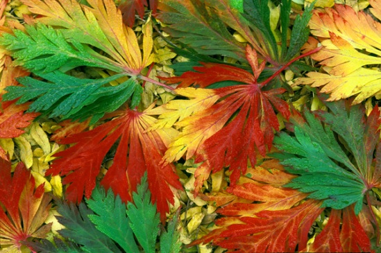 changing-fall-leaves