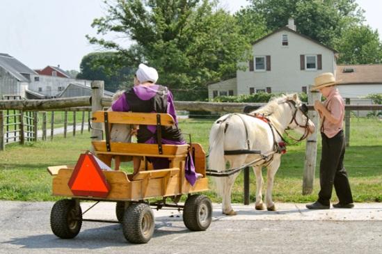 amish-pony-cart