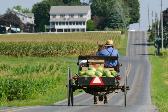 amish-watermelon-run