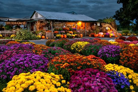 bowmansville-farmstand