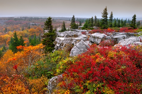 dolly-sods-autumn