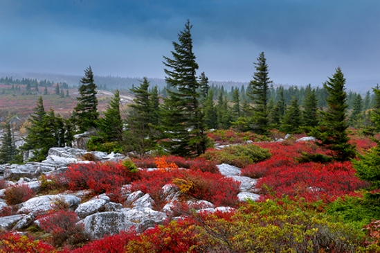 dolly-sods-autumn10