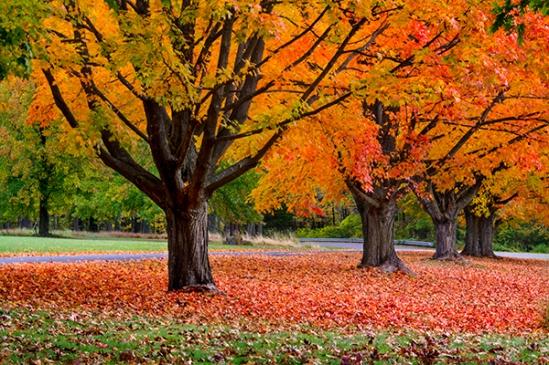 fall-color-shift