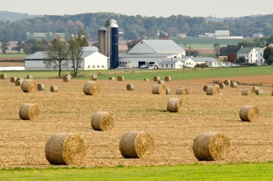round-hay-bale-field