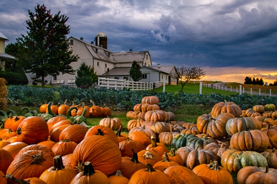 terre-hill-pumpkin-patch