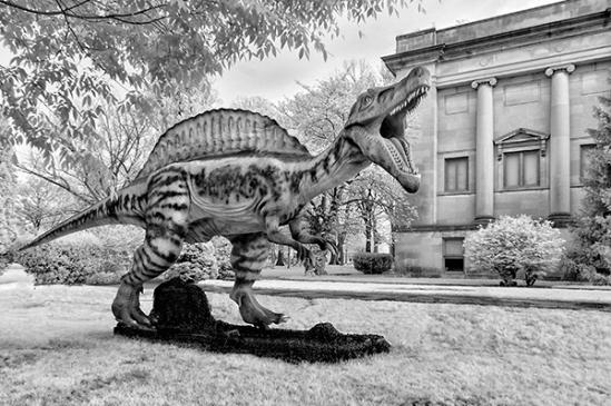 rreading-dinosaur-show