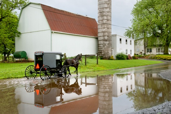 amish-buggy-puddle