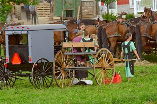 amish-girl-pulls-cart