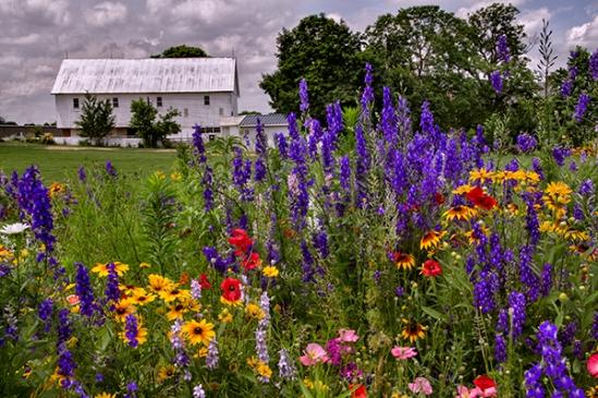 farm-field-flowers