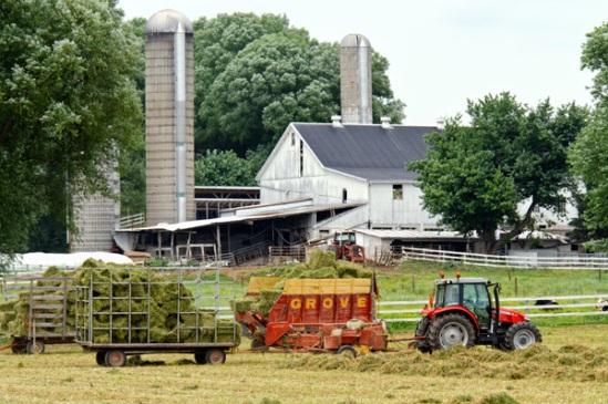 hay-harvesting