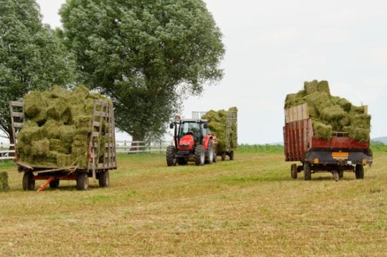 hay-harvesting2