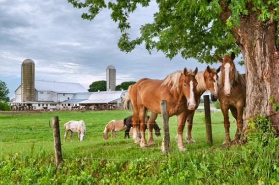 horses-under-tree