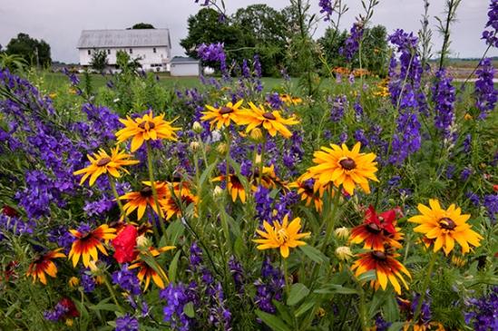 manheim-twp-flowers4