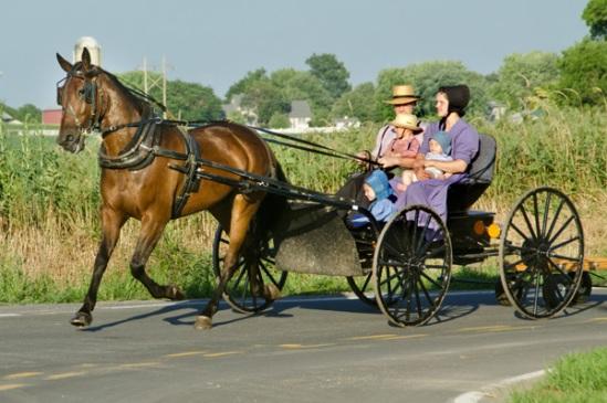 mennonite-buggy-family