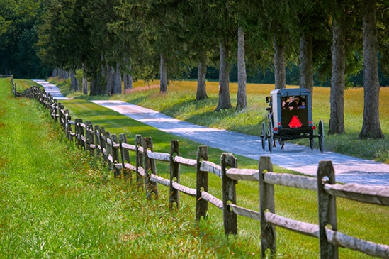 amish-fence-row