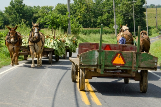 amish-young-drivers