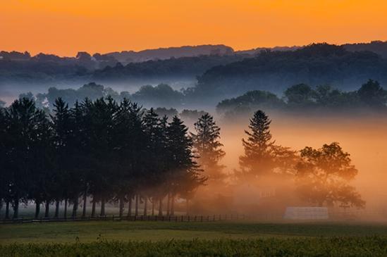 bartville-foggy-pines