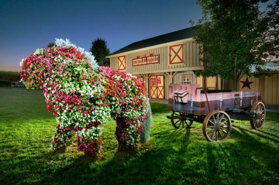 cherry-crest-flower-horse