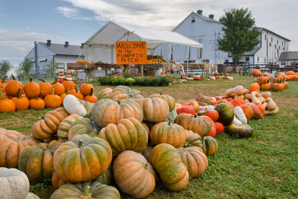 pumpkin-patch-intercourse