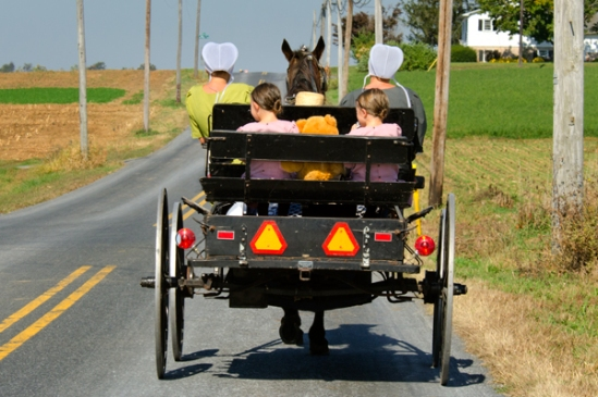 amish-teddy-bear-buggy