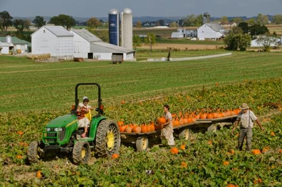 pumpkin-harvest-wagon