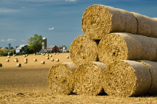 round-hay-bale-field2