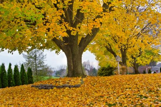 akron-rd-foliage