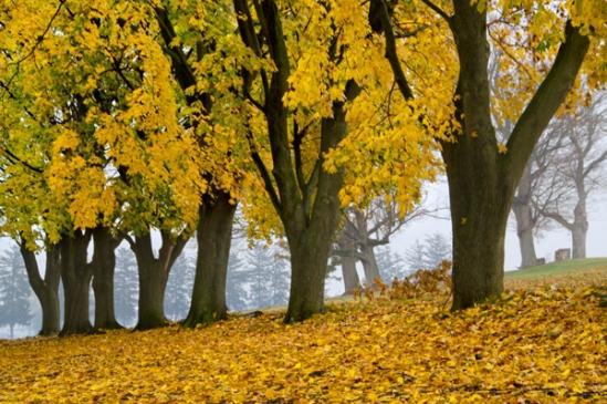 stevens-park-fall