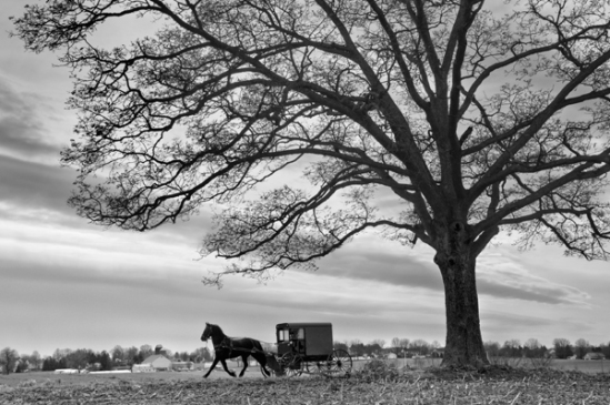 amish-buggy-tree-silhouette