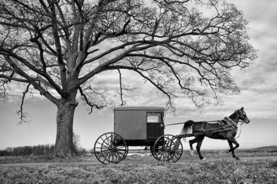 amish-buggy-tree-silhouette2