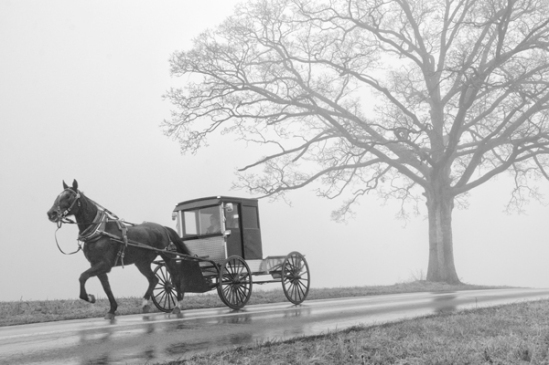 buggy-out-of-the-fog